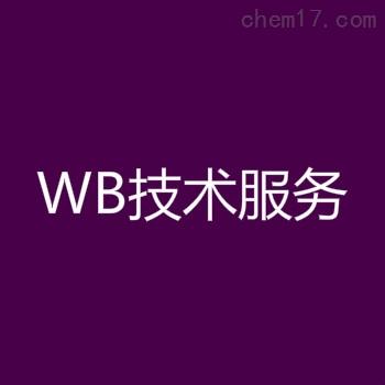 Western Blotting技术服务