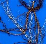 植物根系分析系统厂家