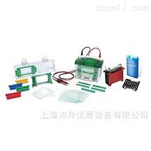 伯乐Bio-Rad小型垂直槽及转印系统