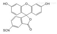 荧光素cas:3326-32-7异硫氰酸荧光素FITC