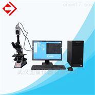 纤维分析仪-武汉国量仪器有限公司