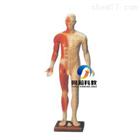 人體針灸模型