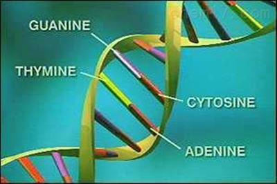 高密度脂蛋白胆固醇(HDL-C)校准品