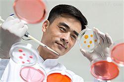 MIC-iCell-s007小鼠纤维环细胞/免疫荧光鉴定