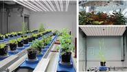 高通量植物表型成像分析系统(三维成像版)