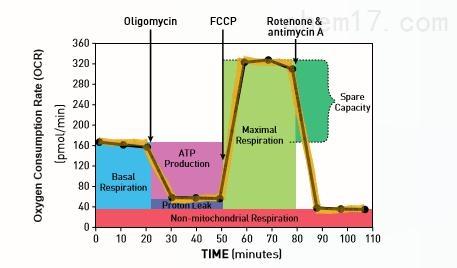 Seahorse XFe细胞能量代谢分析技术服务