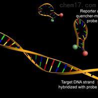 实时荧光定量PCR实验服务
