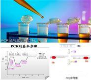 鲍疱疹样病毒PCR检测试剂盒进口
