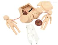 KAC/5A分娩临床综合技能训练模型