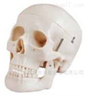 KAC/104自然大头颅骨模型