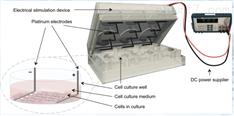 现货-电刺激细胞实时观察培养系统