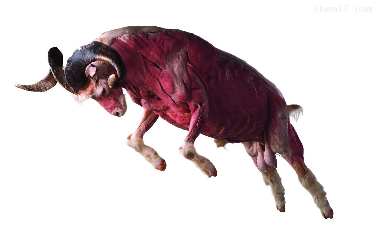 浸泡动物标本液态硅橡胶