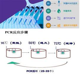 50T内氏放线菌探针法荧光定量PCR检测试剂盒