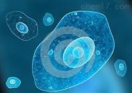 人皮肤癌组织源细胞