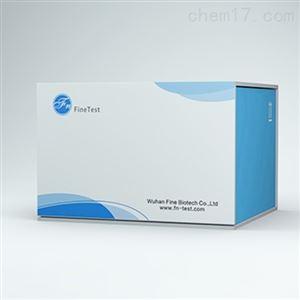 EU3122血栓素B2(TXB2)elisa试剂盒