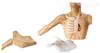 ZK/XC-C69C外周穿刺、中心静脉穿刺插管模型