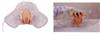 ZK/XC-H408F透明女性导尿模型