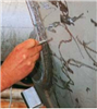 铁素体含量用什么检测比较准